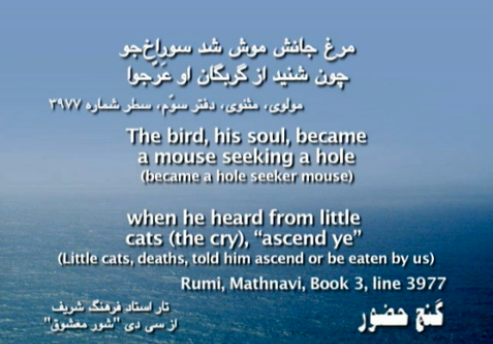 His soul bird became a mouse seeking a hole مرغ جانش موش شد سوراخ‌جو